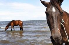 horse-300-236x155